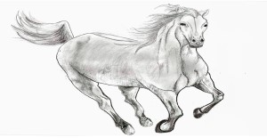 Draw A Horse Cool Drawing Idea